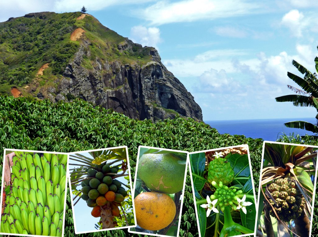 Pitcairn bugner av frukt og vegetasjon. Foto Sigfrid Naterstad