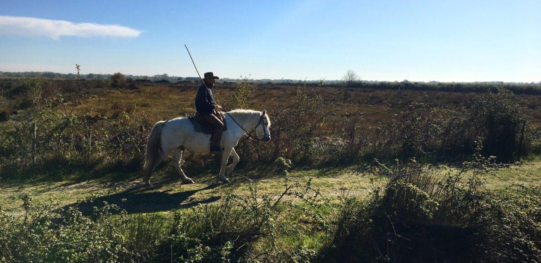 Cowboy på hvit hest i Camargue, Frankrike