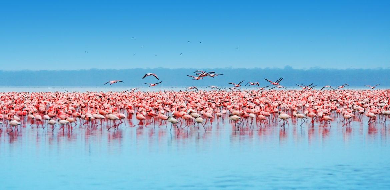 Lake Nakuru Kenya Afrika