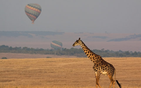 Sjiraff Masai Mara Afrika