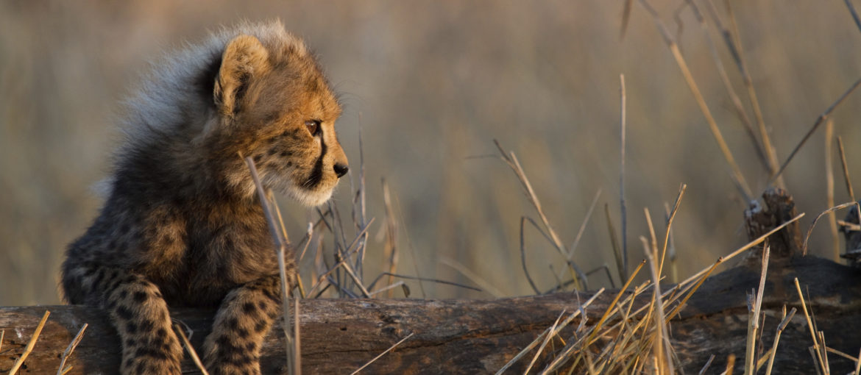 Nyttårsferie i Kenya