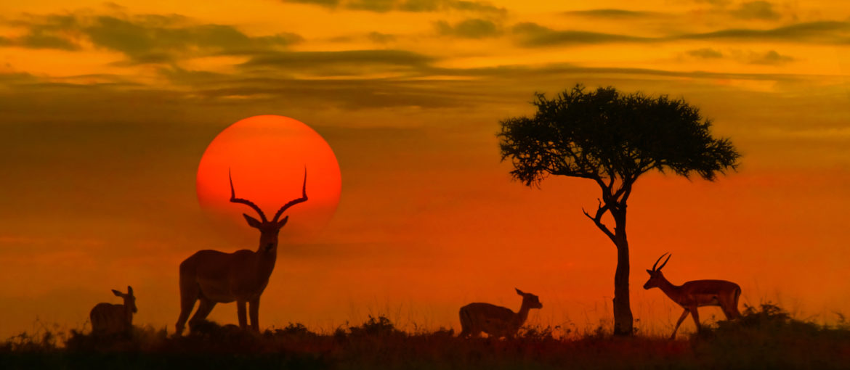 Safari i Kruger
