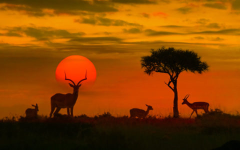 Safari dyr Afrika Kruger