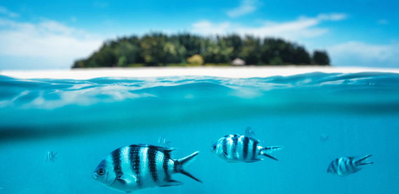 Zanzibar Indiske hav