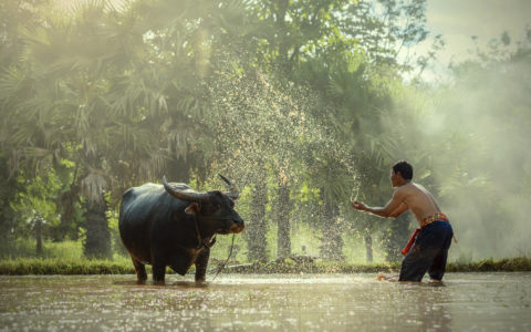 Mekong Vietnam Kambodsja
