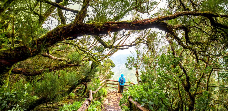 La Gomera, Nasjonalparken Garajonay