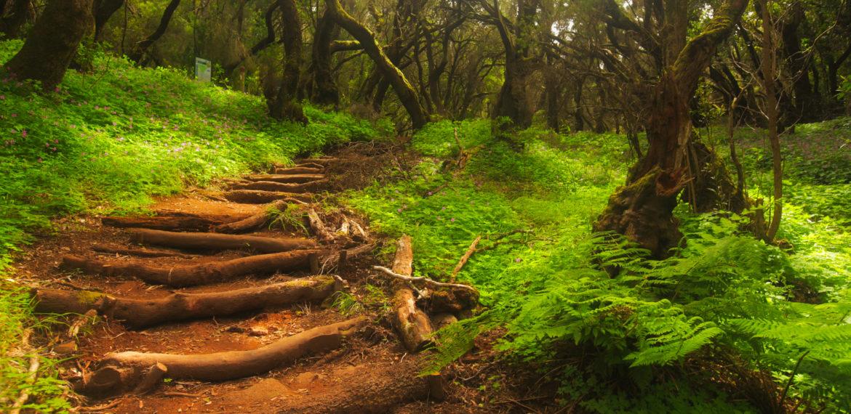 Nasjonalparken Garajonay, La Gomera