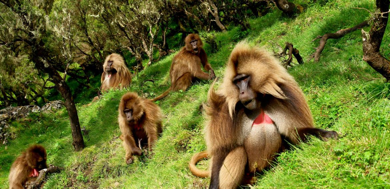 Siemen aper Etiopia
