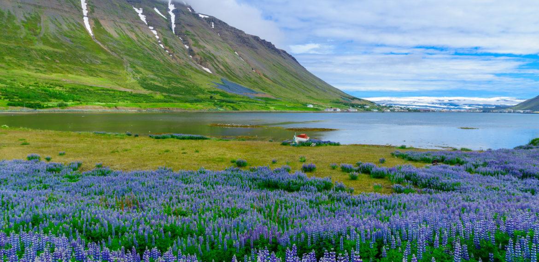 Island Isafjordur town