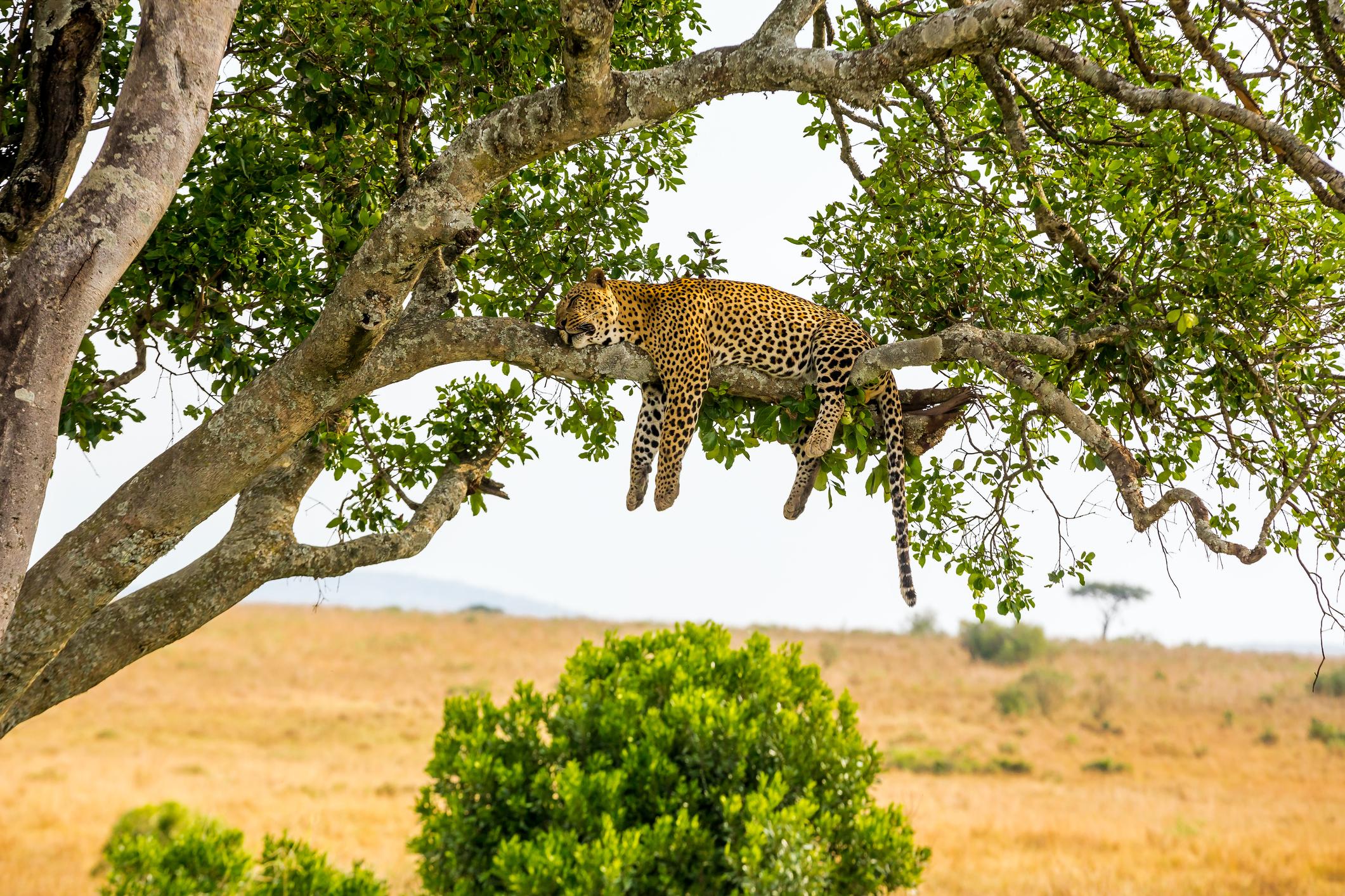 Safari Basecamp Masai Mara - Escape Travel