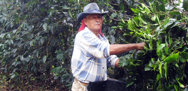 Costa Rica, Coffee picker