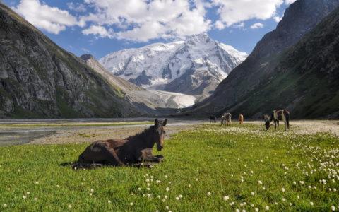 Beitende hester ved Issyk Kul-innsjøen